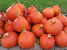 Big orange pumpkin Stock Images