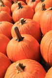 Big orange pumpkins lined up for buyers Stock Photography