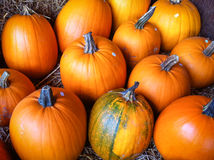 Big orange pumpkins. Orange pumpkins lying on display on a market stall Royalty Free Stock Photography