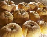 Big orange pumpkins at the old barn Stock Images
