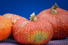 Close up of Three Orange pumpkins. Big orange pumpkins sit on a red and white checkered tablecloth Stock Images