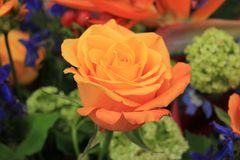 Big orange rose. In a wedding arrangement stock image