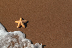 Big orange starfish and ripples at the seashore Stock Photography