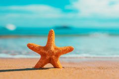 Big orange starfish on the seashore.  summer concept with copy s Royalty Free Stock Images