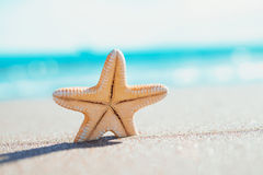 Big orange starfish on the seashore. summer concept with copy space. Royalty Free Stock Photo