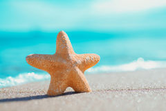 Big orange starfish on the seashore. summer concept with copy space. Royalty Free Stock Photos