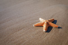 Big orange starfish on wet sands. summer concept with copy sp Stock Photo