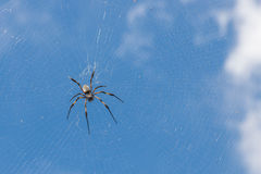 Big orb-web spider and its web in front of the sky Stock Images