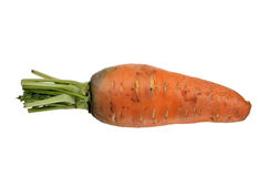 Big organic carrot on white background Royalty Free Stock Photos
