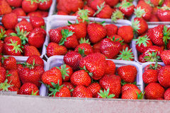 Big organic strawberry in baskets on the market. Stock Photography