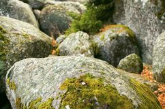 Big Oval Stones With Green Moss. And Fallen Leaves Royalty Free Stock Photos