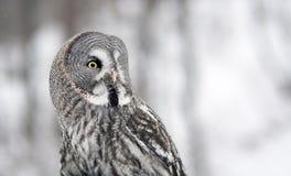 Big owl Stock Photos