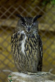 Big owl sitting on wooden in cage Stock Photos