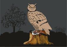 Big Owl Royalty Free Stock Photo