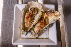 Big  oysters Stock Photography