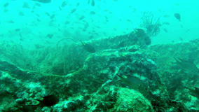 Big pack of tropical fishes over a coral reef stock footage