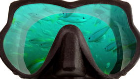 Big pack of tropical fishes is reflected in mask glasses for a snorkeling diving stock footage