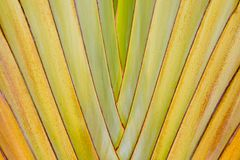 Big palm folding branches abstract Stock Photos
