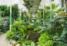 Big palm greenhouse Stock Image