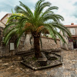 Big palm growing at square of ancient city Stock Images