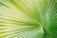 Big palm leaf in color layers Stock Photo