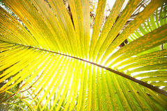 Big palm leaf Stock Image