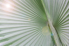 Big palm leaf with light Stock Photography