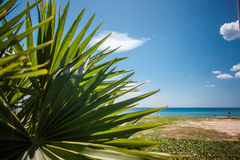 Big palm leaf on the sea beach, sand coastline Stock Photos