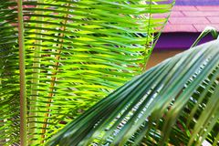 Big palm leaves in tropical garden and a roof as background stock images