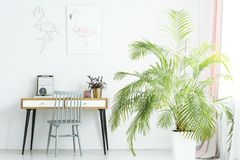 Big palm next to desk. Big palm next to wooden desk in bright home office for a freelancer with gray chair and flamingo poster stock photography