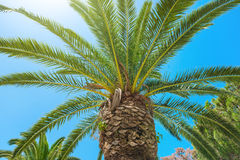 big palm tee στοκ εικόνες