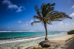 Big Palm Tree Facing the Beach Royalty Free Stock Images