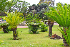 Big palm tree flower Stock Image