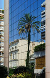 Big palm tree reflection in the glass wall. Big palm tree reflection in the modern glass wall. Monaco Royalty Free Stock Photo