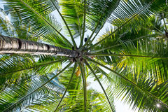Big palm tree in a tropical area Stock Photos