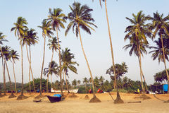 Big palm trees on empty evening beach of popular touristic Goa, India. Chilling mood landscape. Stock Photography