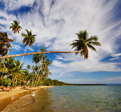 Big palm on tropical beach Stock Images