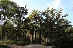 A big palms stock photo