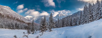 Big panorama of snowy valley in tatra mountains Royalty Free Stock Images