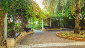 Big park pergola covered by climbing lush plants. Holon, Israel - May 26, 2016: Public half circle pergola with lattice roof is covered by climbing lush green Royalty Free Stock Images