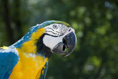Big parrot Stock Photo