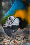 Big parrot in a cage stock images