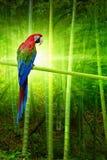 Big parrot Stock Image