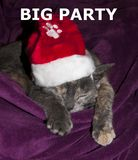 Big party sleeping cat Stock Photography