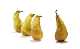 Big pear - leader of pears Stock Images
