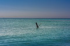 Big Pelican flies over the sea against a blue sky. Blue water color stock photo