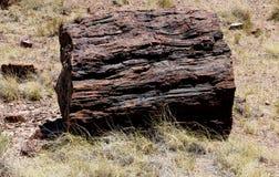 Big Piece of Petrified Wood. In a log laying on the Arizona Desert stock photo