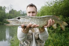 Big pike stock photos
