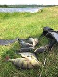 Big pike area fishing. Summer Stock Image