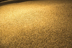 Big pile of barley grain. In a storage house Stock Photo